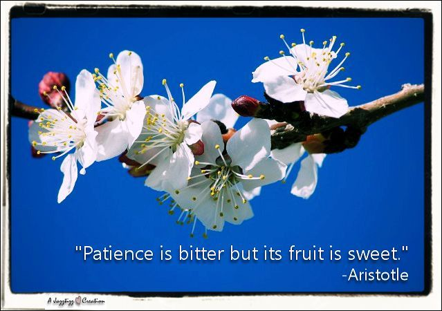 2-43-patience-fruit-bitter-sweet-aristotle